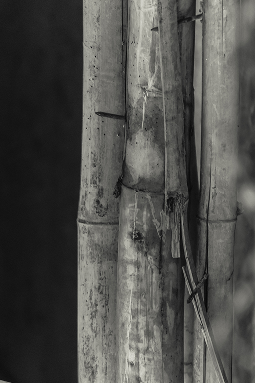 images of bamboo sticks